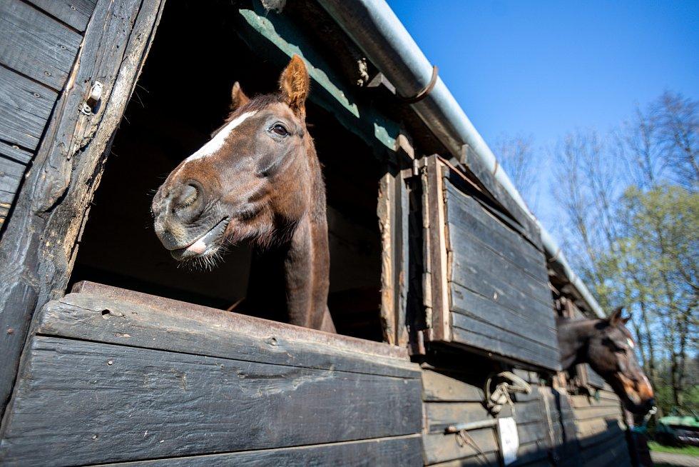 Stáj Newport se specializuje na chov a výcvik koní, nachází v Dolních Domaslavicích nedaleko Žermanické přehrady. Část  jezdeckého areálu je zasazena do příjemného údolí. Snímek z konce dubna 2021.
