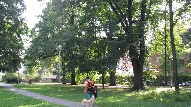 Lidé se procházejí v Malém parku, kde už jsou vzrostlé starší stromy.