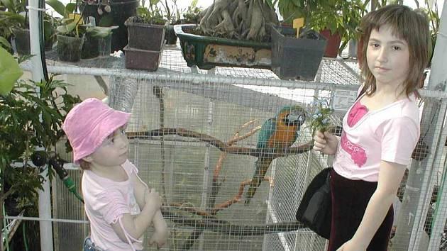 Velkým mluvicím papouškům děti málokdy dokáží odolat.