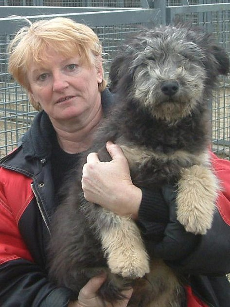 Anna Adamiecová z třineckého útulku se v lednu prakticky nezastavila. Své majitele hledalo na čtyřicet odchycených či nalezených psů.