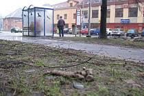Obleva přináší pohledy na psí exkrementy ve městech. Foceno na ulici Ostravská v Místku.