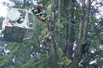 Odstraňování větve z elektrického vedení ve Vyšních Lhotách.
