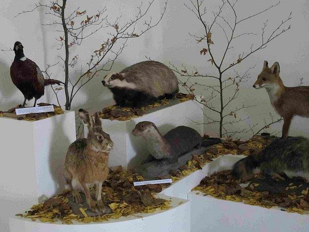 Expozice věnována hukvaldskému hradu nabízí i tato preparována zvířata.