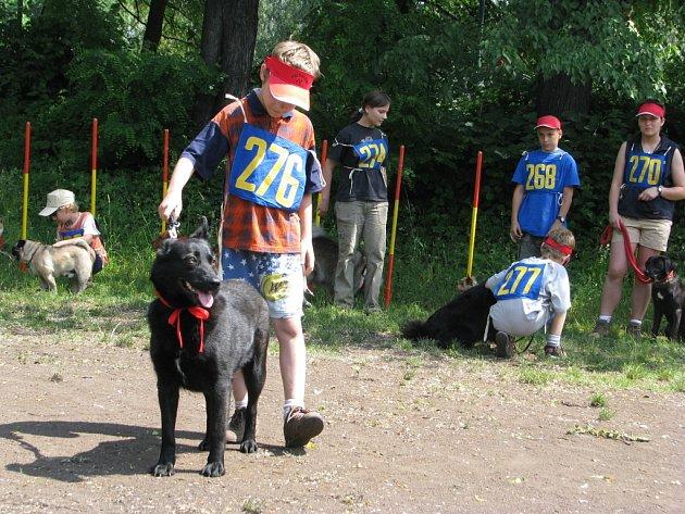V místeckém Sokolíku tuto sobotu dopoledne proběhl už čtvrtý ročník soutěže Psí šikula.