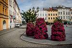 Květinová výzdoba ve Frýdku-Místku, 9. července 2020.