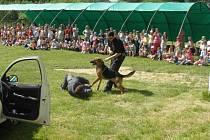 Dětem se velmi líbila praktická ukázka, o kterou se postarali třinečtí psovodi. Týkala se poslušnosti a obranářských prací policejního psa Rona.