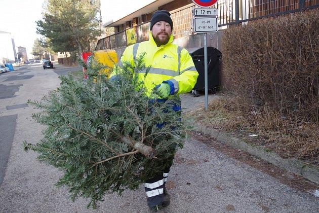 Svoz vánočních stromků vTřinci.