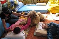 Základní školu speciální společně s Praktickou školou dvouletou v Místku pravidelně navštěvuje v rámci canisterapie Monika Bernardy se svým čtyřnohým kamarádem Foxem, které děti vždy vítají s radostí.