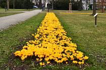 Květinová jarní výzdoba ve Frýdku-Místku.