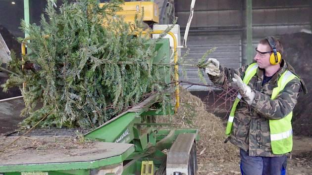 Stovky stromků se proměňují na kompost.