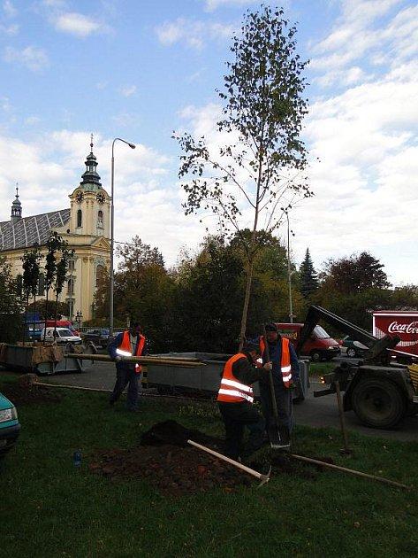 Janáčkova ulice v Místku je osázena novými stromy.