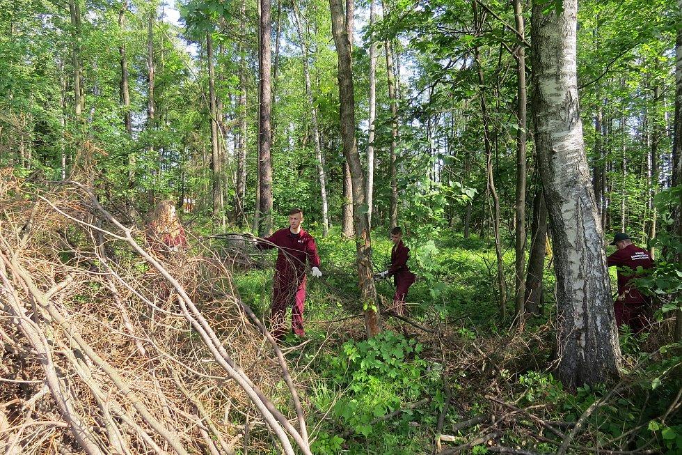 Studenti Střední odborné školy Třineckých železáren v úterý uklízeli ve třineckém lesoparku klestí.