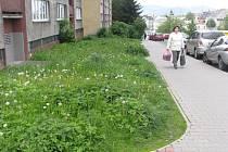 Tradiční problém s vysokým porostem řeší lidé v této části Bruzovské ulice. Jde o dům se vchody 414 až 419, kde pozemky patří státu.