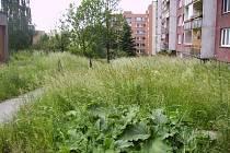 Kamil Vibercsi, jenž žije v Bruzovské ulici ve Frýdku-Místku, si minulý týden vyfotil pozemky u svého bydliště. Pozemky patří Úřadu pro zastupování státu ve věcech majetkových.