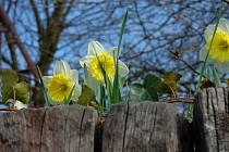 Symbol blížícího se jara.
