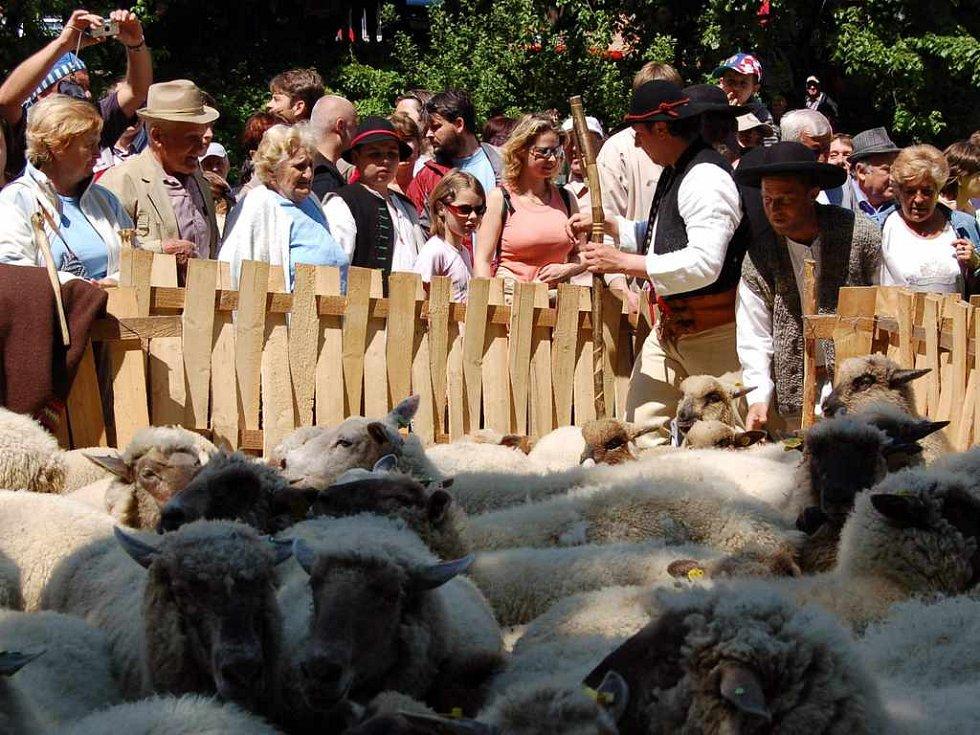 """Ovečky už jsou v """"košáru"""", obřad dále pokračuje."""
