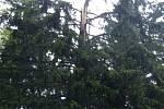Úklid zlomeného stromu na silnici mezi Bílou a Bumbálkou.