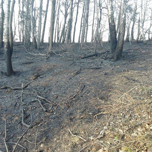 Hasiče zaměstnaly víkendové požáry vlesích vpodhůří Beskyd.  Foto: SDH Kozlovice