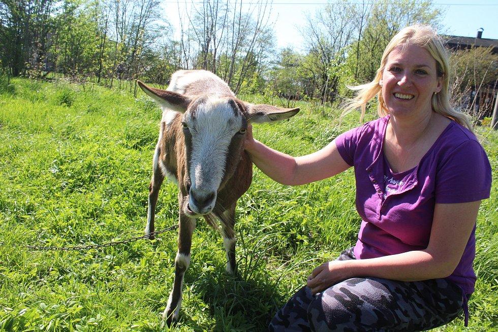 Téměř v centru obce Bystřice usmrtil v květnu v noci vlk jednu ovci. Další přežila. Stejně jako kozel Edík.