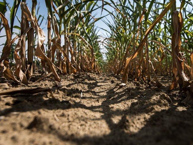 Zemědělce na Vysočině trápí dlouhodobé sucho. Už nyní sčítají ztráty