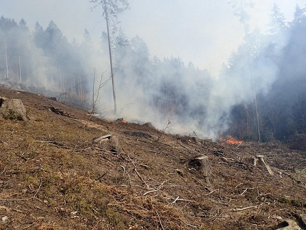 V lese u Návsí hořelo na čerstvě vytěženém svahu.