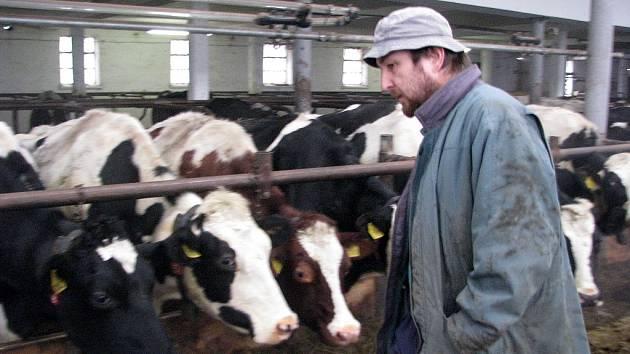 Technický poradce Lubomír Bechný (na snímku) v oboru zemědělství a výživy, který nás provedl kravínem, odmítá, že by někdo zdejší krávy nebo telata týral. Na další fotce jsou i dřevěné boxy, které stěžovatelka kritizovala.