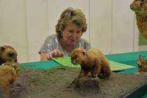 Pracovnice muzea u posledních úprav vitríny s vycpanými zvířaty.