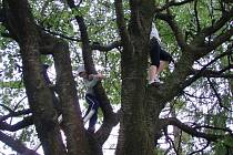Vystrašené děti uvízly na stromě. Sundat je museli hasiči.