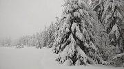 Stromy v Beskydech se bortí pod tíhou sněhu.