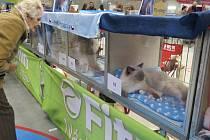 Hala Polárka ve Frýdku-Místku v sobotu hostila výstavu ušlechtilých koček.