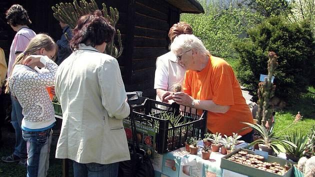 Druhý ročník prodejní výstavy začal v sobotu 25. dubna v domě zahrádkářů ve Frýdlantu nad Ostravicí. Návštěvníci si mohou mimo jiné prohlédnou bonsaje, rostliny a kaktusy.