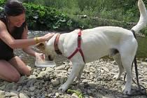 Mantrailing, tedy speciální metoda výcviku, kdy pes sleduje pachovou stopu jediné osoby, se postupně dostává do povědomí. Pes nesleduje skutečnou trasu, kudy se hledaná osoba pohybovala, ale identifikuje místa, kde se zachytila její pachová stopa.
