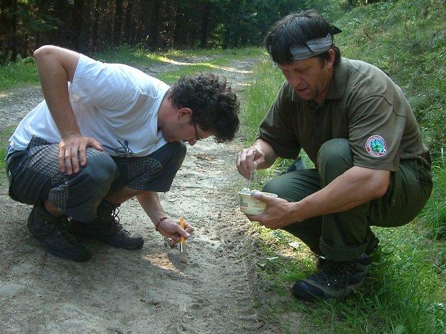 František Šulgan (vpravo) společně se synem Michalem odlévají do sádry stopy rysa, které objevili na turistické cestě vedoucí na Lysou horu. Archivní snímek