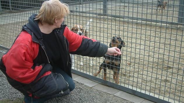Ilustrační snímek z psího útulku.
