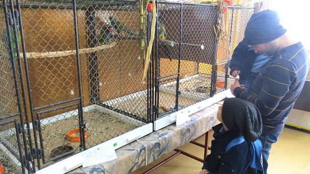 Lidé si mohou v chovatelském domě ve Frýdku prohlédnout desítky druhů papoušků a jiného okrasného ptactva.