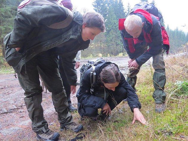 Hledání stop v trávě i blátě je důležitou součástí při mapování populace velkých šelem. Archivní snímek.