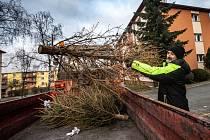 Ve Frýdku-Místku začne ve čtvrtek svoz vánočních stromků. Ilustrační foto.