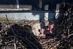 Na komínu Třineckých železáren se zahnízdila vrána.