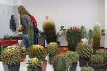 Výstava kaktusů a sukulentů ve Frýdku-Místku.