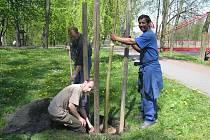 Pracovníci frýdecko–místeckých technických služeb začali s výsadbou mladých stromů a keřů. Tento stromek zasadili v sadech Bedřicha Smetany poblíž bývalých tenisových kurtů.