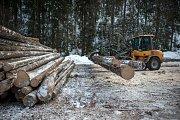 Těžba dřeva v Biskupských lesích, kde se kácí smrky pro stavbu nového kostela v třineckých Gutech.
