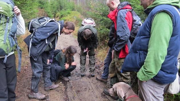 Dobrovolníci Vlčích hlídek vyrazili o víkendu do beskydských lesů. Hledali stopy velkých šelem.