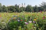 Park Pod zámkem – rozkvetlá louka.