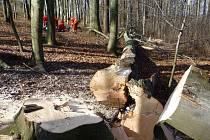 V Brušperku v sobotu dopoledne zemřel šestapadesátiletý muž při kácení stromů. Zasáhla ho větev padajícího stromu.