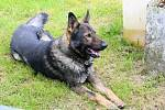 Policejní pes Kilián pomohl vypátrat seniora.