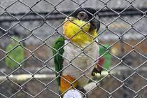 Výstava exotického ptactva ve Frýdku-Místku.
