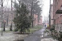 Výkopové práce pro generální opravu horkovodu můžou za to, že část stromů, které rostou u domů ve Vrchlického ulici, půjde k zemi.