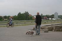 Trvale označení mazlíčci. Ve Frýdku–Místku nyní žije kolem 4,5 tisíce čipovaných psů. Občas se některý z nich zaběhne, vyhledat majitele podle čísla mikročipu je však hračka. Ilustrační foto.