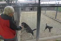 Třinecký útulek nyní ubytovává čtrnáct zatoulaných psů. Ilustrační foto.