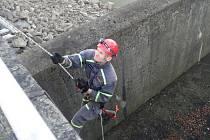 Mládě zraněného kosa zachránili hasiči u přehrady Olešná.